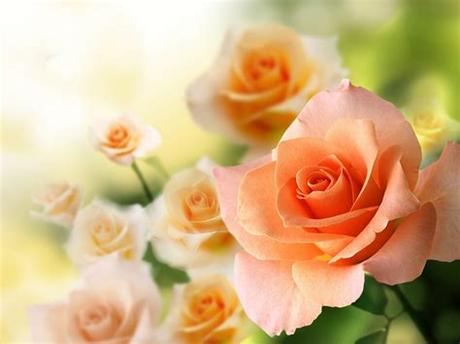 Browse the biggest collection of high resolution love wallpaper photos on pngtree. Rose flowers flower roses bokeh landscape nature garden ...