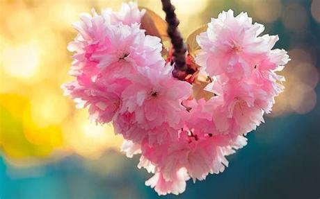 Love flower wallpaper hd white background high resolution red rose. Heart bloom love heart flowers nature spring wallpaper ...