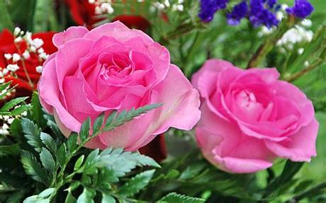 Feel free to download, share. Moril-bouquet de roses Full HD Fond d'écran and Arrière ...