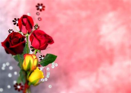 Free download high quality wallpapers gorgeous images. Roses Flower Nature Red Flowers Hd Wallpapers 1080p ...