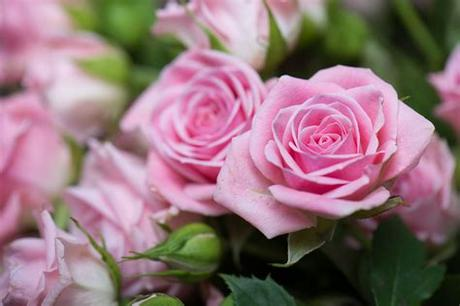 Red love rose ❤ 4k hd desktop wallpaper for 4k ultra hd tv. Roses - Love Flowers HD Wallpaper Theme - Impressive Nature