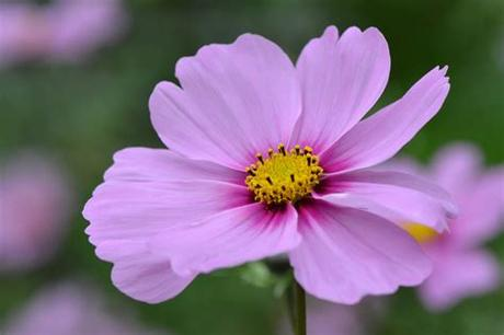 Download and use 60,000+ flowers stock photos for free. Purple flower images free stock photos download (11,291 ...