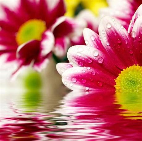 Download flower images wallpapers for free. Hd flower picture 06 hd pictures Free stock photos in ...