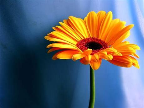 Save 20% with code unsplash20. Orange Flower Wallpaper Flowers Nature Wallpapers in jpg ...