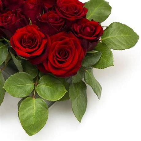 Download transparent flowers png for free on pngkey.com. Rose flowers free stock photos download (11,612 Free stock ...