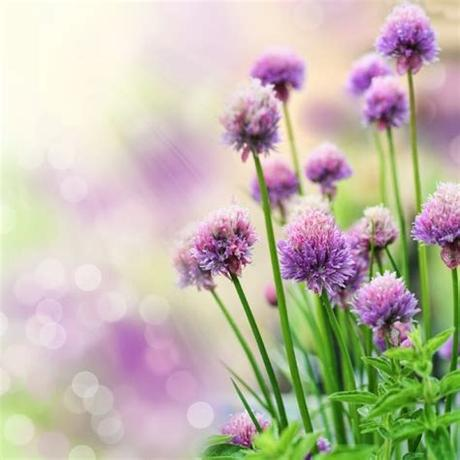 Download and use 60,000+ flowers stock photos for free. Beautiful natural flower free stock photos download ...