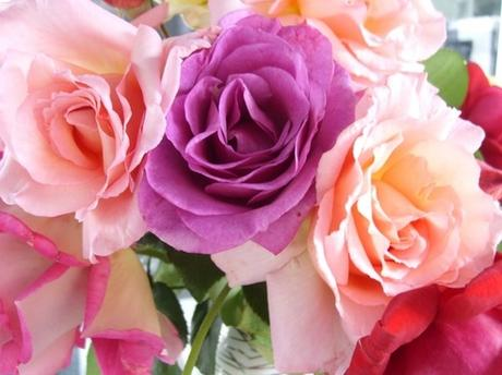 Rose flowers free stock photos download (11,612 Free stock ...