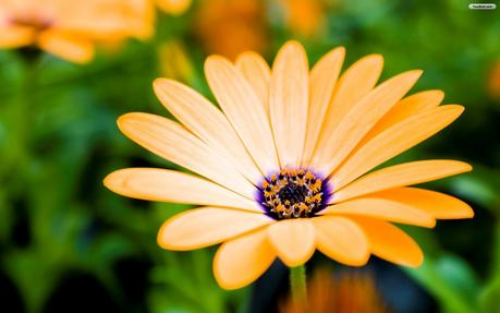 Free download All photos gallery flower wallpaper flowers ...