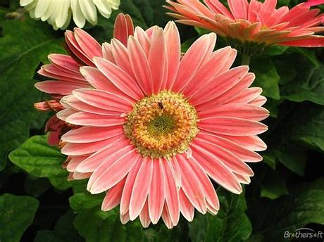 Download high quality flower pictures for your mobile, desktop or website. Image detail for -Download Free PlayColors Flowers ...
