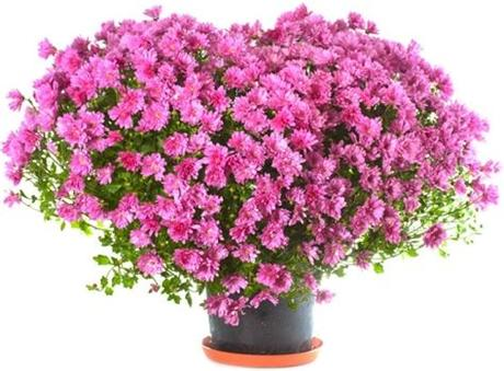 Hd to 4k quality, all free for download! Hd pictures of beautiful flowers 05 Free stock photos in ...