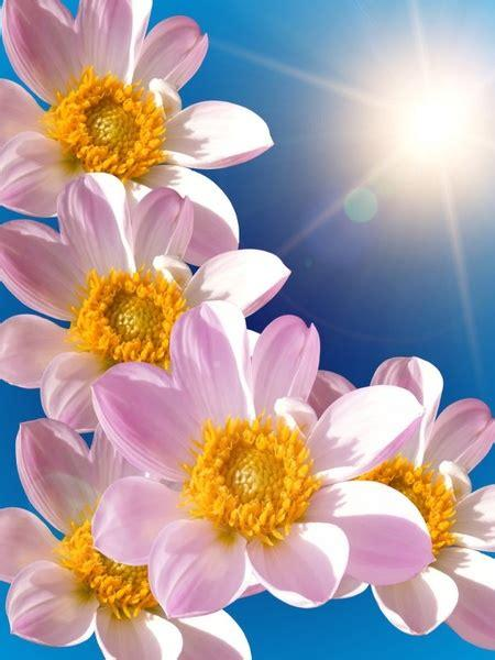 Hd to 4k quality, all ready for download! Beautiful flowers hd picture Free stock photos in Image ...