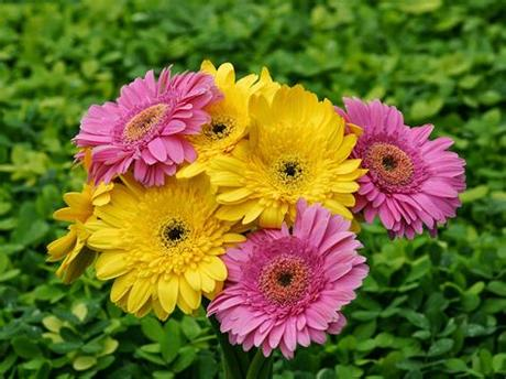 Color chart available for all files. Beautiful Flowers Image Download - FREE ALL HD WALLPAPERS ...