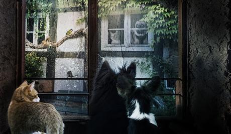 Image: window animals dogs cat rainy weather neighborhood, by Ulrich B./lassaffa on Pixabay