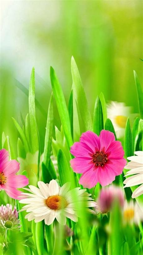 Hd wallpapers and background images. iPhone Wallpaper Spring Flowers   2020 3D iPhone Wallpaper