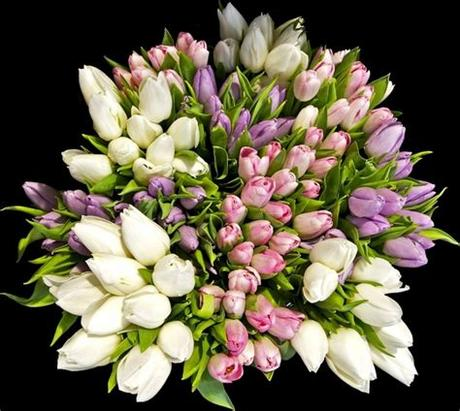 Freepng is a free to use png gallery where you can download high quality transparent png images. Flower bouquets pictures free stock photos download ...
