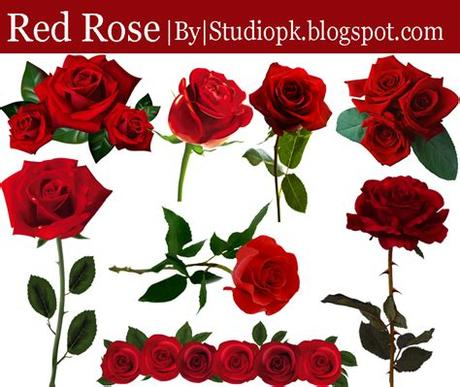 Find & download free graphic resources for birthday flowers. Red Rose Png Flower Image Free Download - StudioPk