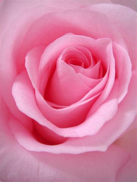 So here it is for all to taste and share sai ram. 100+ Pink Flower Images | Download Free Pictures On Unsplash
