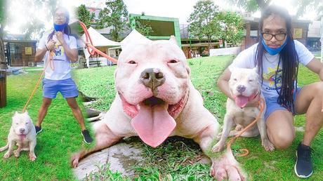 dog training,puppy training,puppy training basics,american bully philippines,cute dogs,cute dog videos,cute dogs and puppies doing funny things