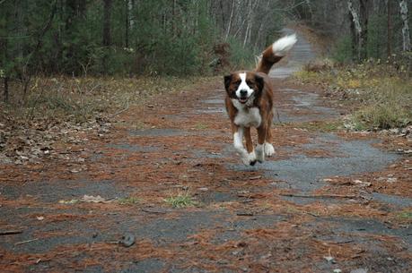 June 8 is Pet Memorial Day: Remembering Keira
