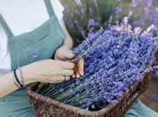 Beautiful Lavender Farms Near Portland