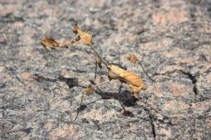 Dead Leaf Mantis [Haibun]