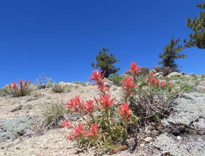MOUNT PINOS, Southern California: On Top of the World