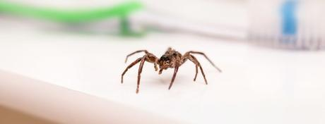How To Keep Spiders Away – 19 Natural Methods