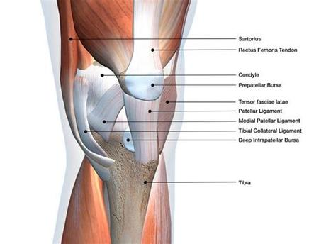 Lateral ankle injury assessment online course: Anatomy of Knee