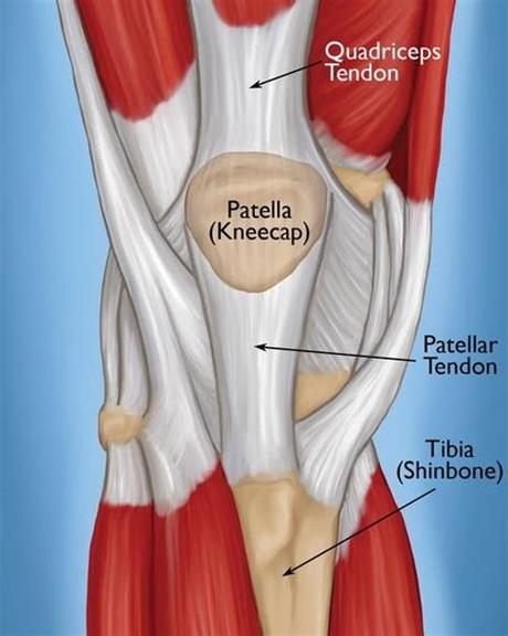 Every part of your body other than your lower right leg should continue facing the bar. Left Leg Ligaments : Men Women Left Right Leg Knee Support ...