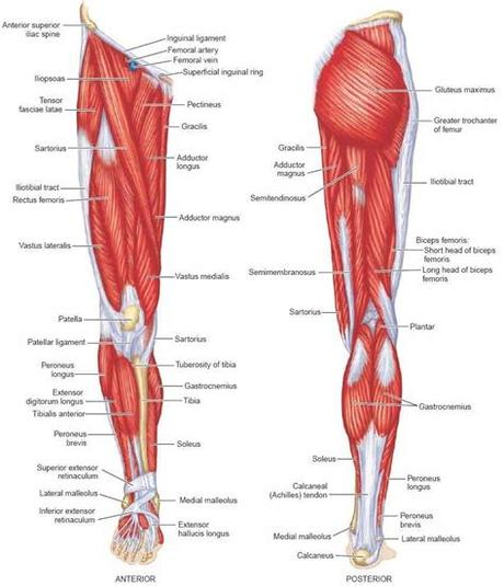A high ankle sprain is less common in everyday life but can be seen in competitive athletes. Lower Limb: Bones,Muscles,Joints & Nerves » How To Relief