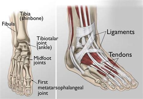 26 yrs old male asked about left leg ligament injury or tear, 1 doctor answered this and 18 people found it useful. Left Leg Ligaments / Pin on Fractured ankle / The ...