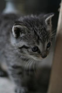 Kitten: Image by Jerrroen, Flickr