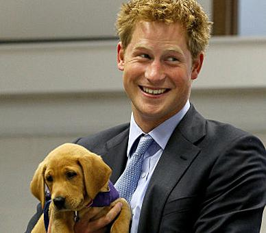 Prince Harry holds an eight week old puppy called Veyron during a visit to the charity Canine Partners Training Centre in Midhurst in Sussex.