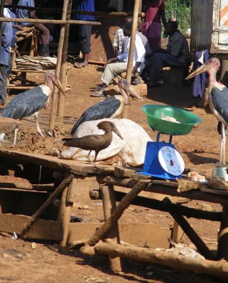 Nature Uganda Vulture Count 2012