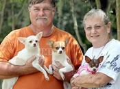 Dogs Seized Cruelty Case Adopted