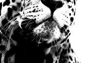 Leopard Soldier