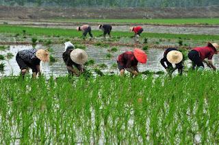 Rural studies in China