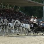 Lipizzaner horses and carriage