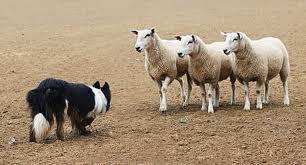Lead Nurturing - Be the Sheep Dog