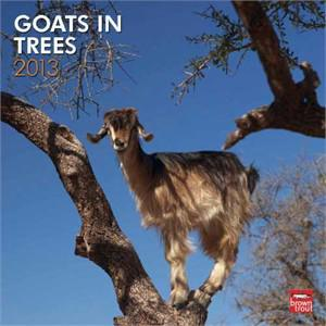 Goats in trees calendars have become a bizarre, but popular show item to display in the office.