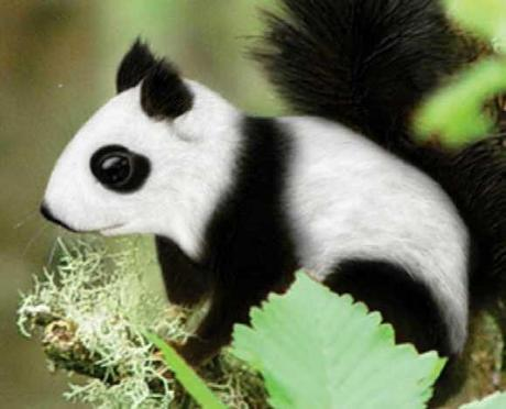 Pandas Expressed: The Top 10 Animal Panda Lookalikes