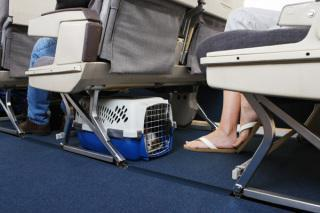 Pets must fit under the seat in front of you: image via blog.dachs2danes.com