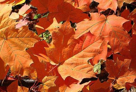 burnt orange ann horn Fall Color ~ Designing with Orange and Prize Winner HomeSpirations
