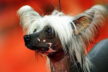 8 Weirdest Dog Breeds Ever