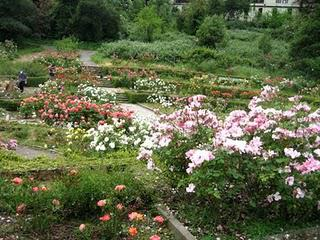 Oakland Rose Garden: A Hidden Gem