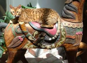 Miaow Miaow: Not a Noisy Kitty But a Really Bad Cat