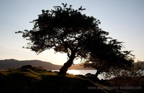 Photo - trees at dusk, on the island of Lismore