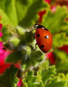 Using Integrated Pest Management to Manage Pests Naturally
