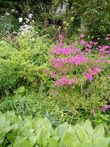 The May Delights of a Long Island Garden