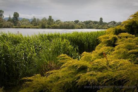 Photo - Duddingston Loch, Edinburgh